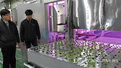 机器人头条,韩国研发机器人培育人参和蘑菇