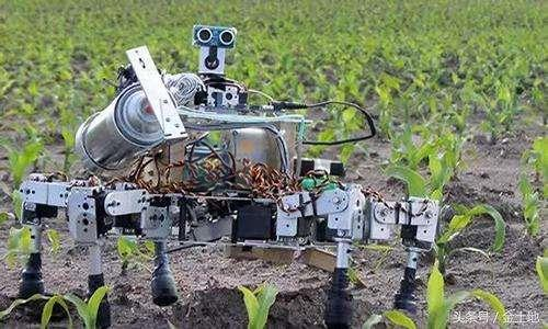 人工智能通过分析环境温度、降雨量、土壤盐分等数据,帮助农业从业者合理规划生产种植